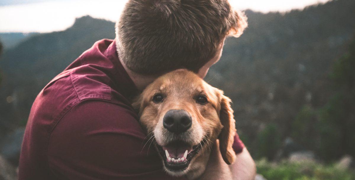 Pets & Us